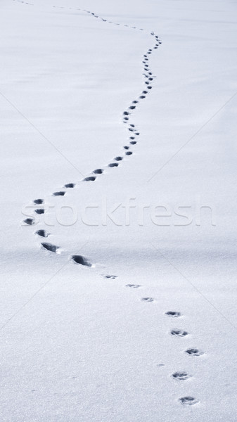 Animal tracks prints in the snow Stock photo © mikdam