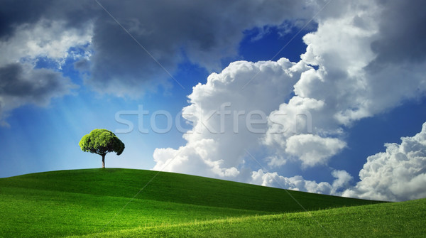 Lonely tree on green filed Stock photo © mikdam