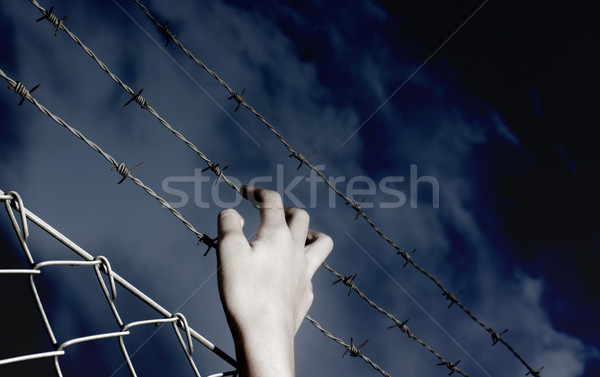 Barbed Wire and a hand Stock photo © mikdam
