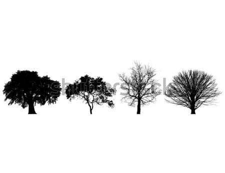 Négy fák feketefehér fa erdő absztrakt Stock fotó © mike301