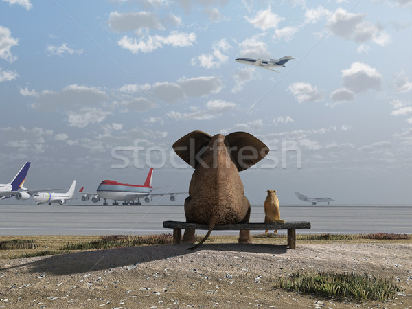 elephant and dog sitting at the airport Stock photo © mike_kiev