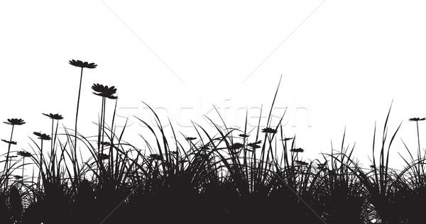 Stok fotoğraf: çim · papatya · gökyüzü · güneş · doğa · manzara