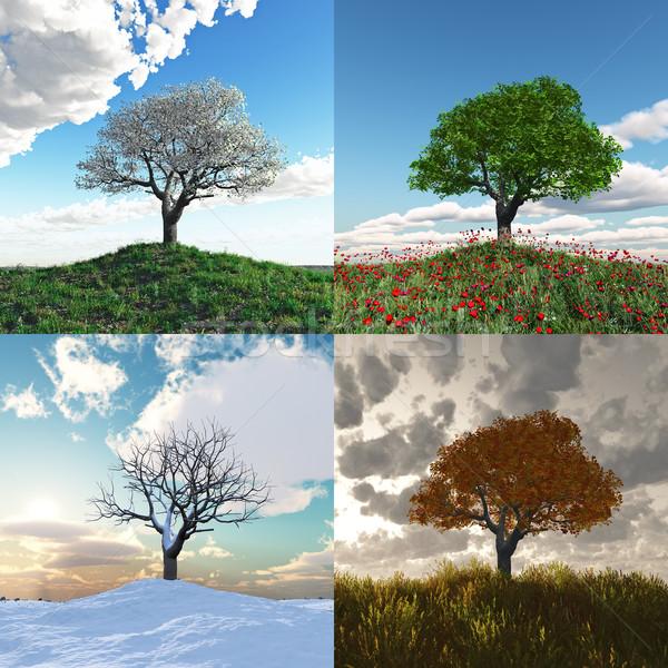 Samotny drzewo cztery pory roku niebo chmury trawy Zdjęcia stock © mike_kiev