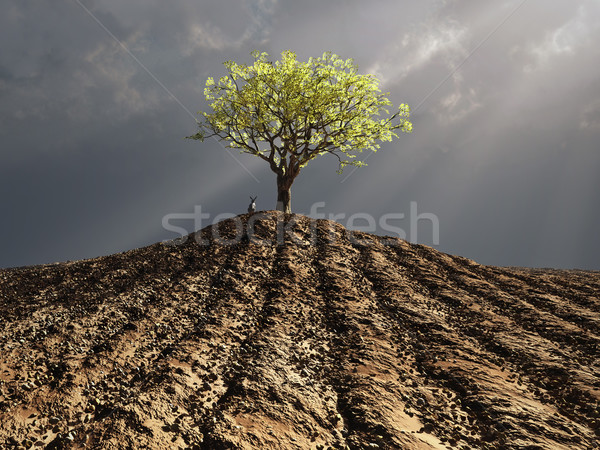 lonely tree in the middle of plowed field Stock photo © mike_kiev