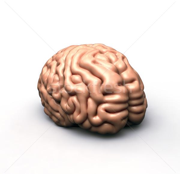 人間の脳 白 ボディ 健康 人間 心 ストックフォト © mike_kiev