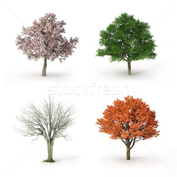 Fa négy évszak virág természet narancs levelek Stock fotó © mike_kiev