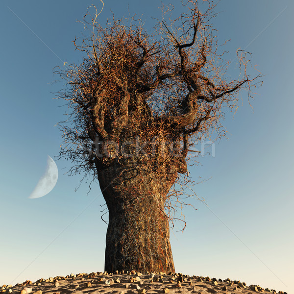 Solitário nu árvore céu madeira lua Foto stock © mike_kiev