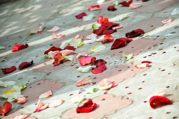 花弁 バラ 階 花 背景 赤 ストックフォト © mikhail_ulyannik