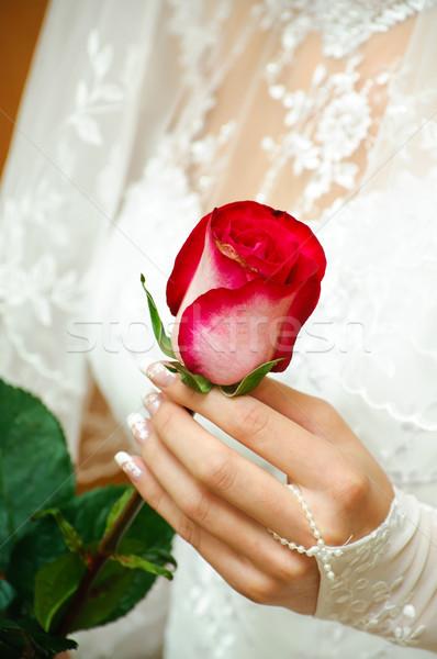 wedding rose Stock photo © mikhail_ulyannik