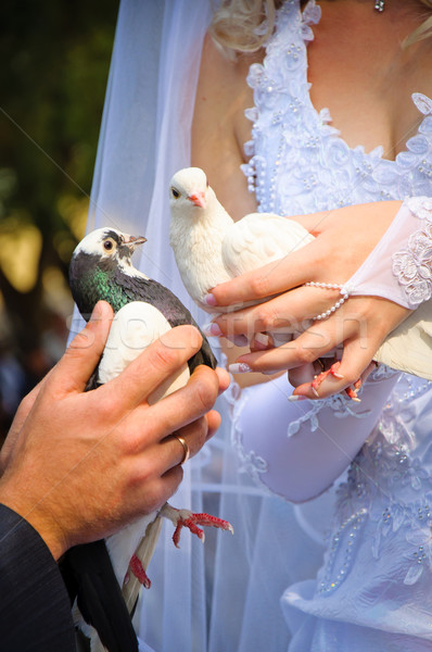 Coppia wedding mani amore Coppia bellezza Foto d'archivio © mikhail_ulyannik