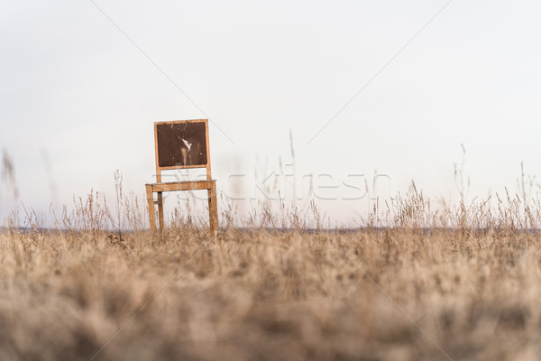 Lonely old wooden chair Stock photo © MikhailMishchenko
