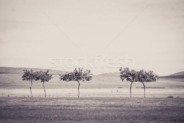 Small trees at Gobi deser Stock photo © MikhailMishchenko