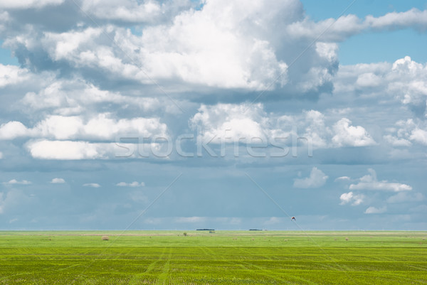 Clouds in blue skies and green grass beneath Stock photo © MikhailMishchenko