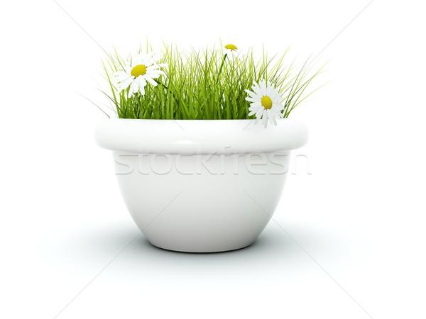 Grama flores isolado branco jardim fresco Foto stock © MikhailMishchenko