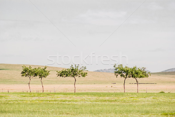Small lonely trees. Beginning of the Gobi desert Stock photo © MikhailMishchenko