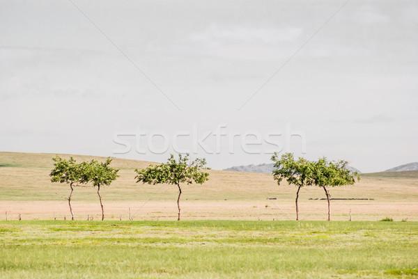 Faible solitaire arbres début désert Photo stock © MikhailMishchenko