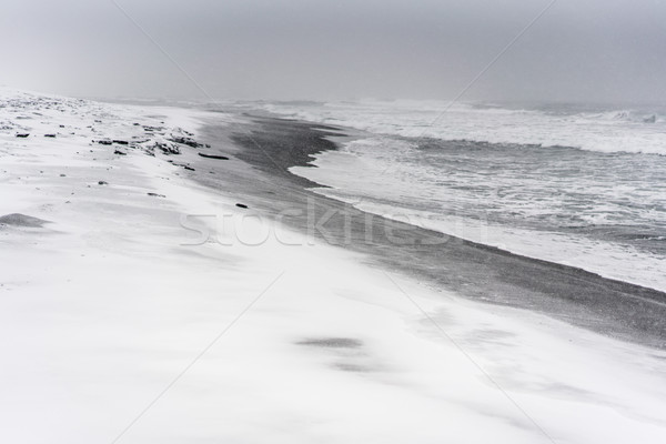 Blizzard on a beach of the Pacific ocean with black sand Stock photo © MikhailMishchenko