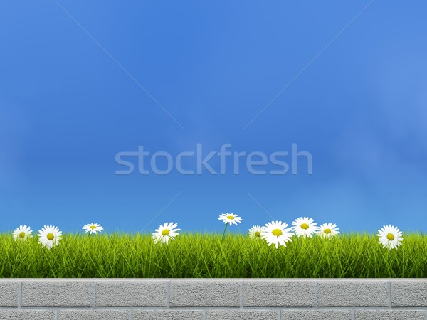 Flower bed with grass and camoline Stock photo © MikhailMishchenko