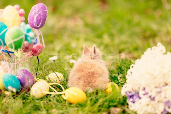 Христос воскрес Cute мало Bunny цветы пасхальных яиц Сток-фото © MilanMarkovic78
