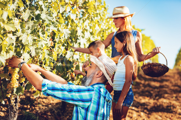 Család szőlőskert aratás gyönyörű fiatal mosolyog Stock fotó © MilanMarkovic78