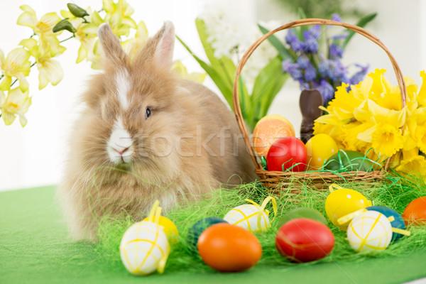 Húsvéti nyuszi tojások kosár virág szelektív fókusz fókusz Stock fotó © MilanMarkovic78