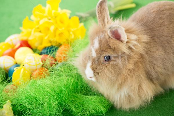 イースターバニー 卵 花 選択フォーカス フォーカス ウサギ ストックフォト © MilanMarkovic78