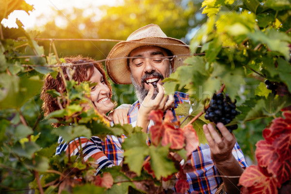 Wijngaard proeverij mooie glimlachend paar Stockfoto © MilanMarkovic78