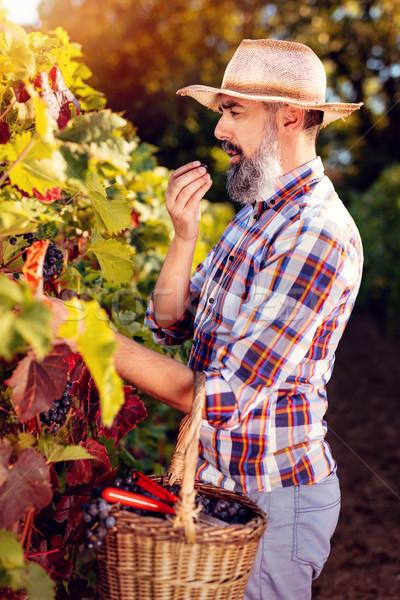 Vina cosecha guapo vino sombrero de paja degustación Foto stock © MilanMarkovic78