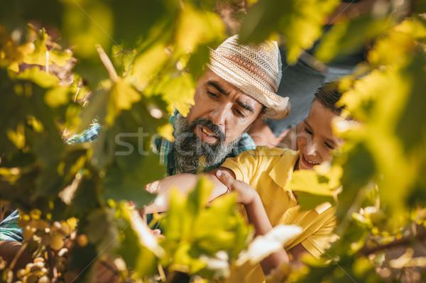 Choice Of Grapes Stock photo © MilanMarkovic78