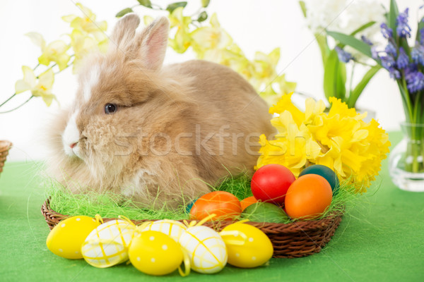 Conejo de Pascua huevos cesta flor atención selectiva enfoque Foto stock © MilanMarkovic78