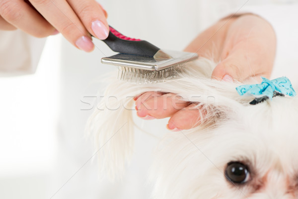 Dog Grooming Stock photo © MilanMarkovic78