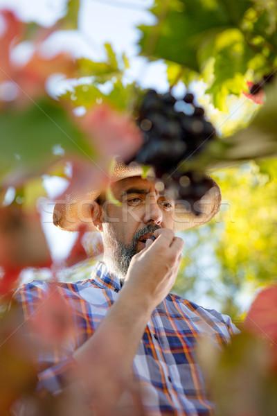 Tasting Grapes Stock photo © MilanMarkovic78