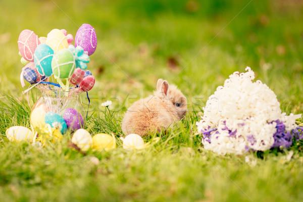 かわいい バニー 花 イースターエッグ ストックフォト © MilanMarkovic78