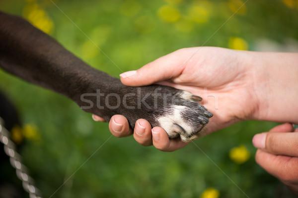 Dar pata perro mano humana equipo brazo Foto stock © MilanMarkovic78