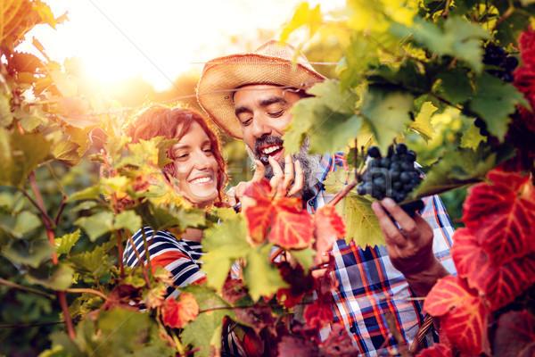 Winnicy zbiorów piękna uśmiechnięty para cięcie Zdjęcia stock © MilanMarkovic78