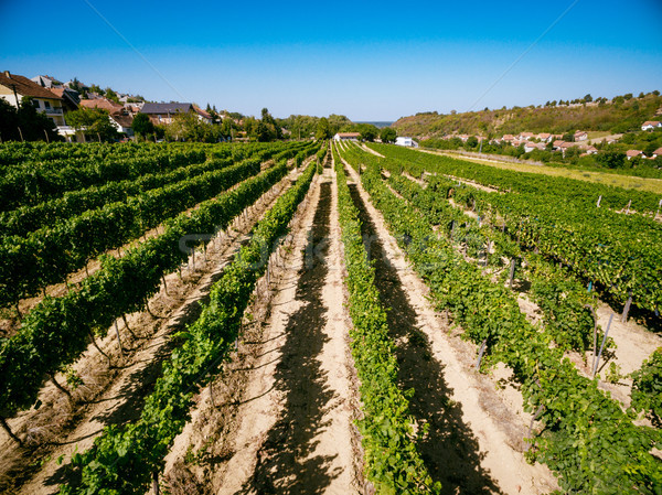 пейзаж виноградник красивой небе фон Сток-фото © MilanMarkovic78