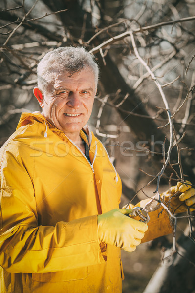 Pruning In The Orchard Stock photo © MilanMarkovic78