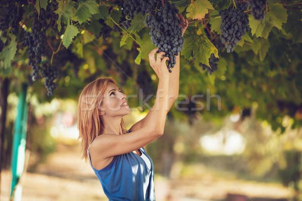Vinha colheita belo sorridente mulher jovem mulher Foto stock © MilanMarkovic78
