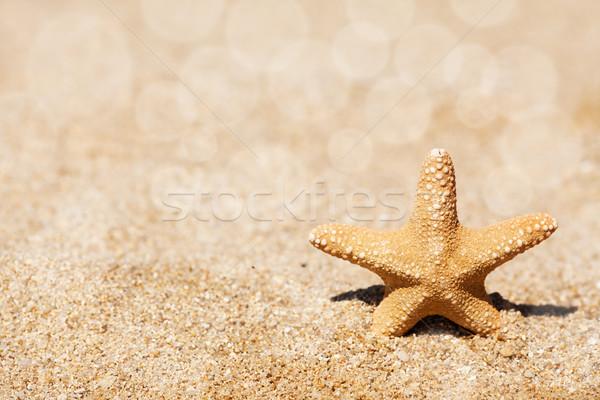 Zeester zand strand zomer tropische Stockfoto © MilanMarkovic78