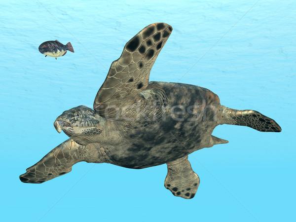 Giant Sea Turtle Archelon Stock photo © MIRO3D