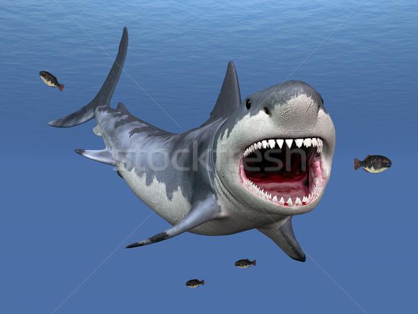 Great White Shark Stock photo © MIRO3D