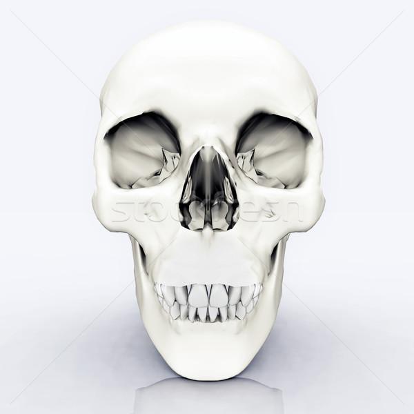 人間 頭蓋骨 コンピュータ 生成された 3次元の図 科学 ストックフォト © MIRO3D