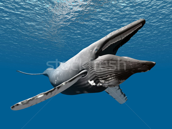 Humpback Whale Stock photo © MIRO3D