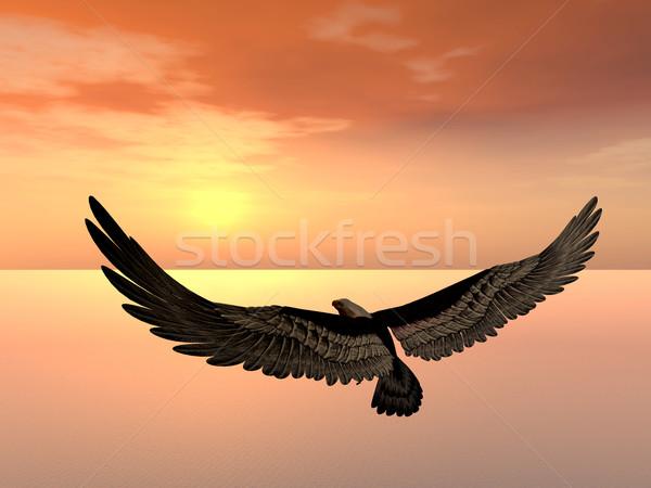 Sea Eagle Stock photo © MIRO3D