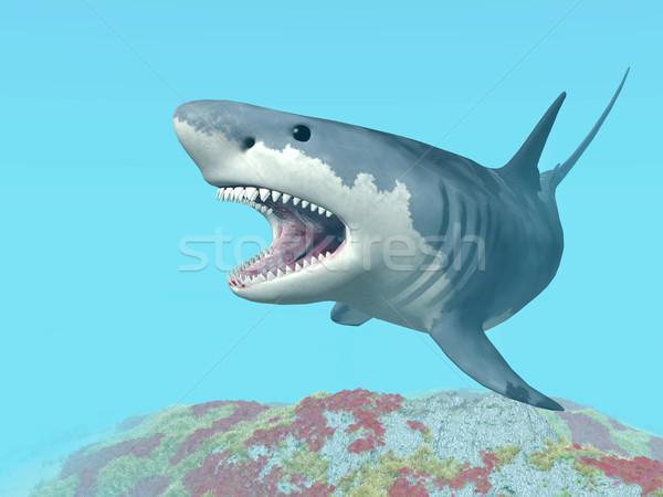 ストックフォト: 白 · サメ · コンピュータ · 生成された · 3次元の図