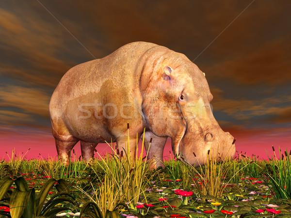 Hippo Stock photo © MIRO3D