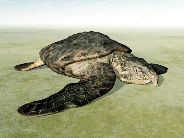 óriás tenger teknős száraz számítógép generált Stock fotó © MIRO3D