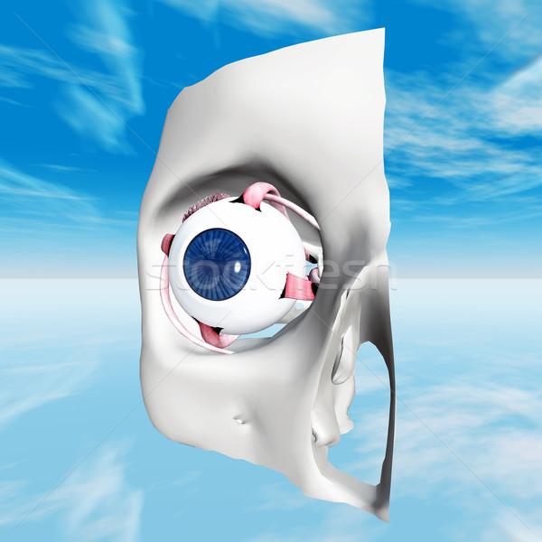 человека глаза компьютер генерируется 3d иллюстрации Blue Sky Сток-фото © MIRO3D