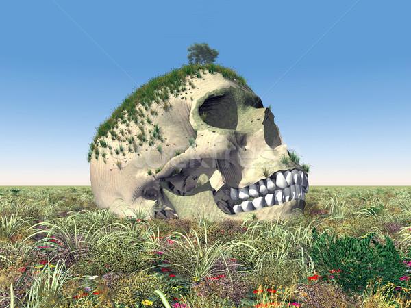 Human Skull Stock photo © MIRO3D