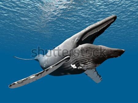 Katil balina bilgisayar oluşturulan 3d illustration Stok fotoğraf © MIRO3D
